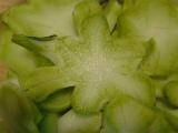 ブロッコリー茎ザーサイ風1.jpg
